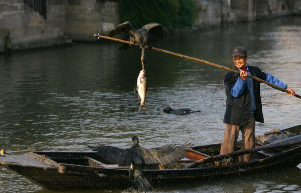 и как они ловят рибу