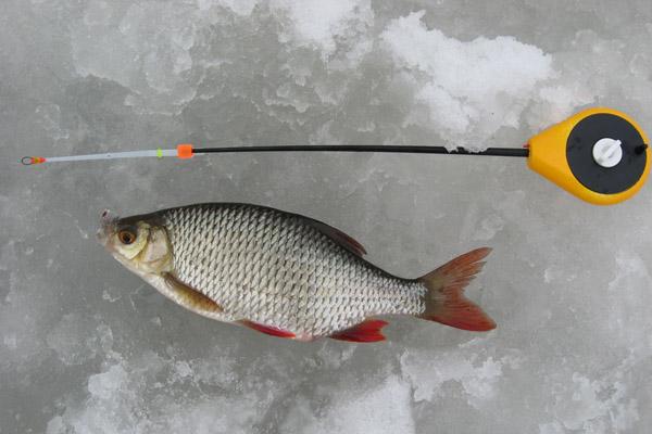ловля красноперки на озерах