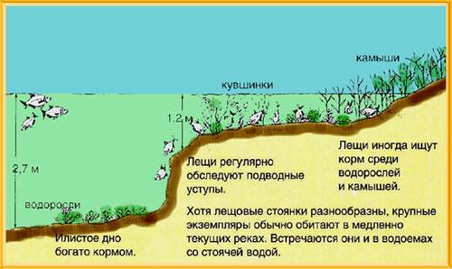 как найти место для ловли сазана