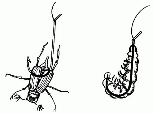 оснастка на майского жука
