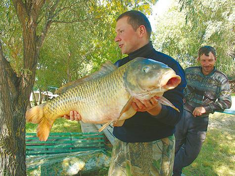 рыбалка на кубани сазан
