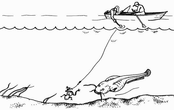 Как ловить сома на квок и не допустить ошибок