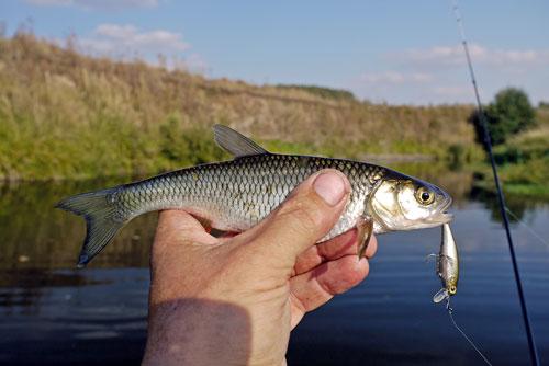 ловля окуней на маленьких речках