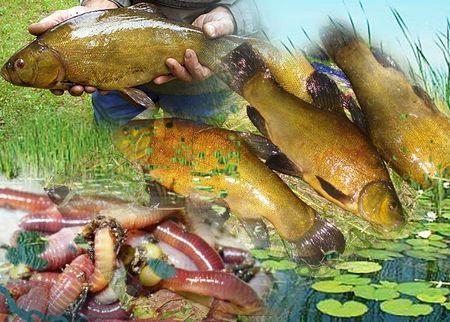 где клюет рыба в омской области 2015